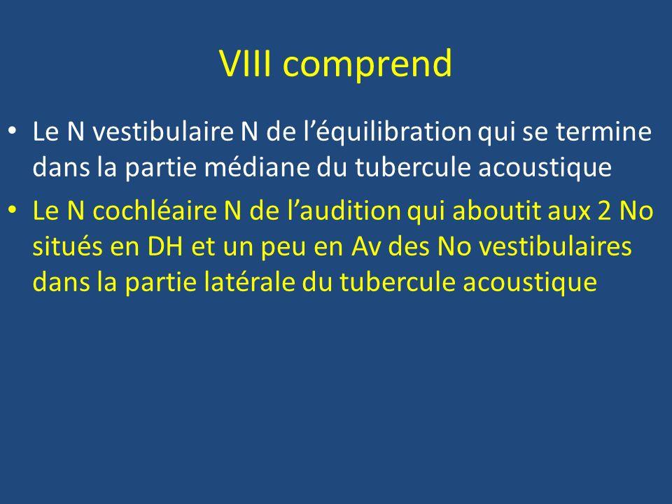 Le VIII = N vestibulo- cochléaire