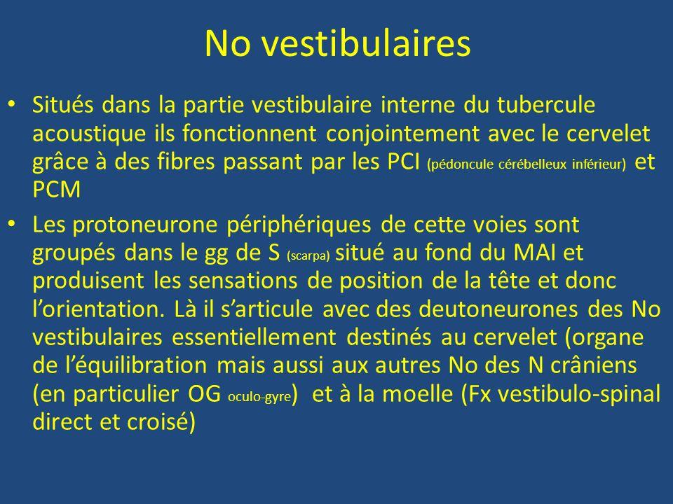 VIII comprend Le N vestibulaire N de léquilibration qui se termine dans la partie médiane du tubercule acoustique Le N cochléaire N de laudition qui a