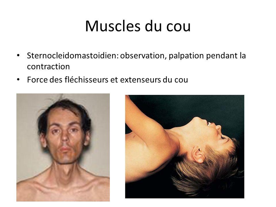 Muscles du cou Sternocleidomastoidien: observation, palpation pendant la contraction Force des fléchisseurs et extenseurs du cou
