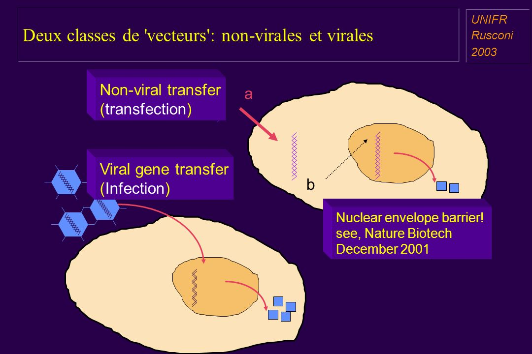 Deux classes de 'vecteurs': non-virales et virales a aa a aa UNIFR Rusconi 2003 a b Non-viral transfer (transfection) Viral gene transfer (Infection)