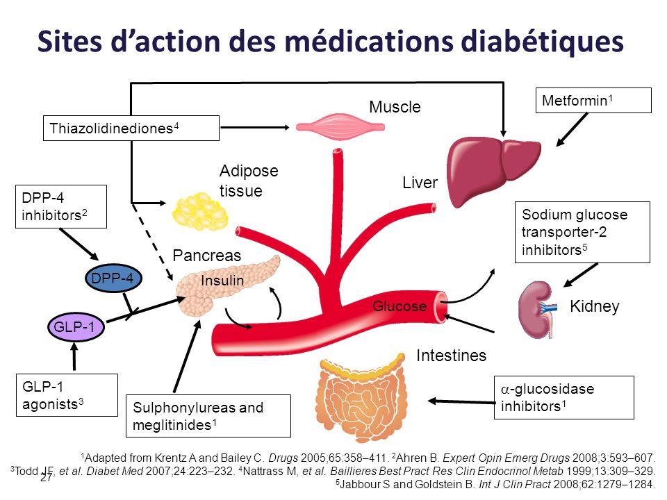 27 Glucose Adipose tissue Intestines Liver Sulphonylureas and meglitinides 1 Metformin 1 Muscle Pancreas Insulin -glucosidase inhibitors 1 Thiazolidin