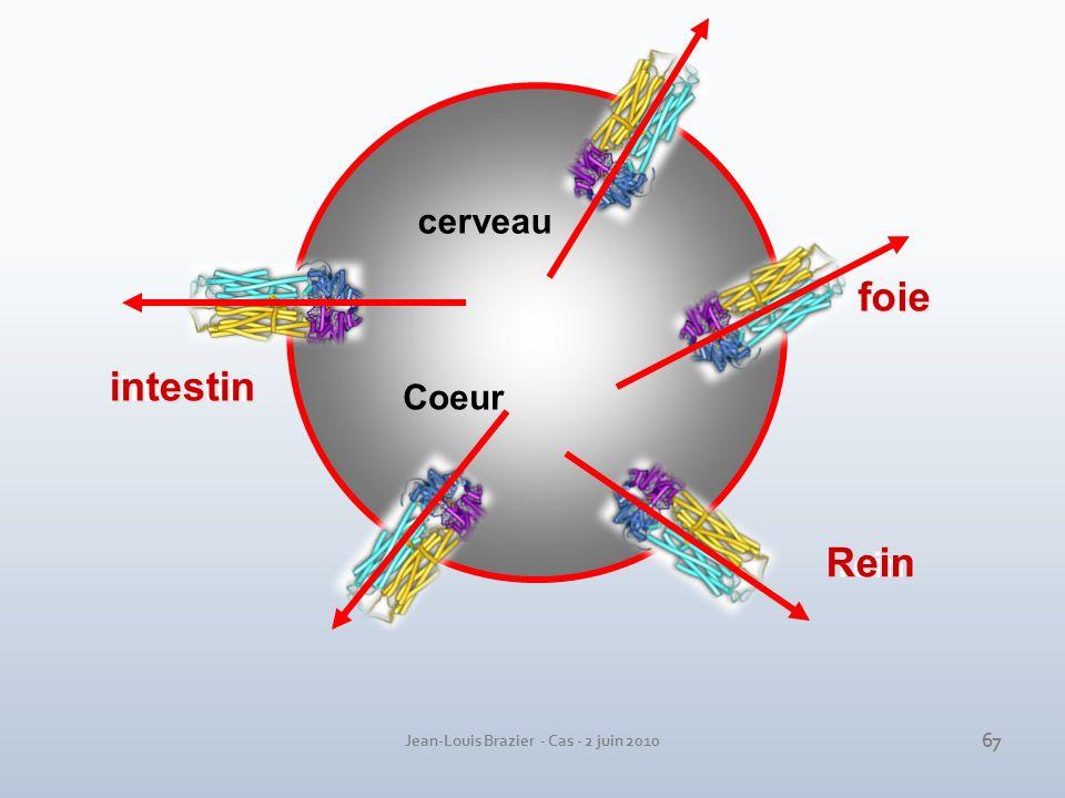Jean-Louis Brazier - Cas - 2 juin 2010 intestin cerveau foie rein Coeur intestin foie Rein 67