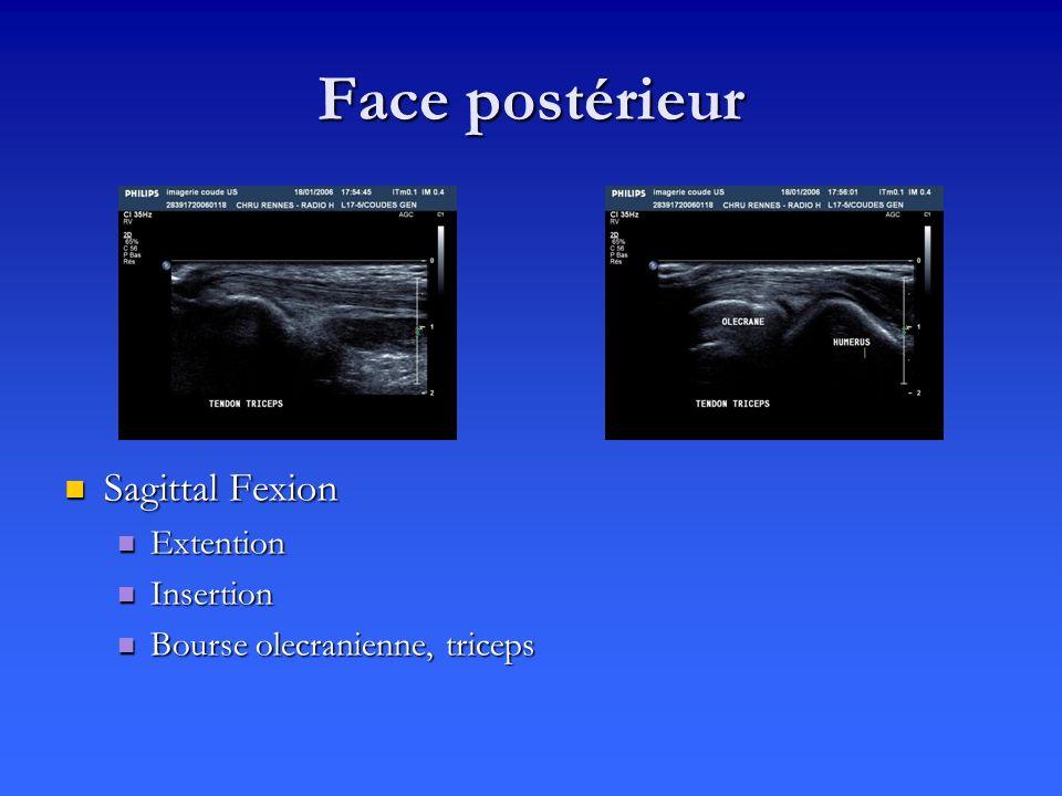 Face postérieur Sagittal Fexion Extention Insertion Bourse olecranienne, triceps