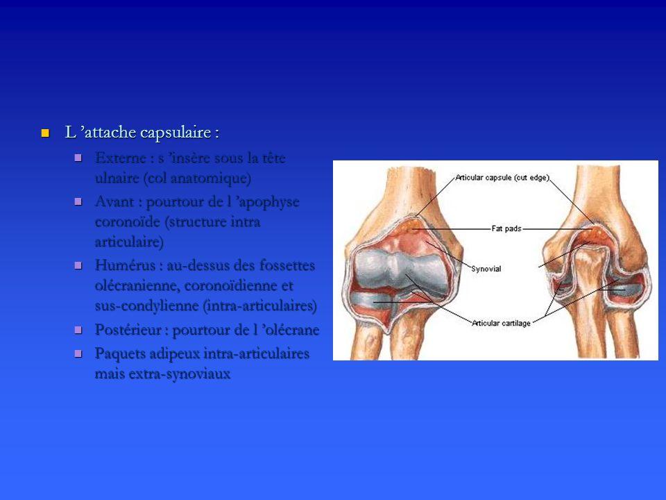 Renforts capsulo-ligamentaires Renforts capsulo-ligamentaires Plan capsulo-ligamentaire interne Plan capsulo-ligamentaire interne Ligament collatéral ulnaire : Ligament collatéral ulnaire : Faisceau antérieur : épicondyle au versant interne de la coronoïde Faisceau antérieur : épicondyle au versant interne de la coronoïde Faisceau postérieur : épicondyle à l olécrane Faisceau postérieur : épicondyle à l olécrane Faisceau intermédiaire : coronoïde à l olécrane Faisceau intermédiaire : coronoïde à l olécrane Plan capsulo-ligamentaire externe Plan capsulo-ligamentaire externe Ligament collatéral radial Ligament collatéral radial épicondyl au ligament annulaire épicondyl au ligament annulaire Au contact de la capsule et des épicondyliens Au contact de la capsule et des épicondyliens Ligament collatéral ulnaire latéral Ligament collatéral ulnaire latéral épicondyle au bord externe du cubitus épicondyle au bord externe du cubitus