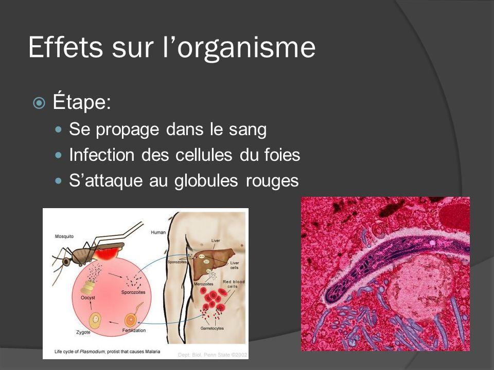 Effets sur lorganisme Étape: Se propage dans le sang Infection des cellules du foies Sattaque au globules rouges