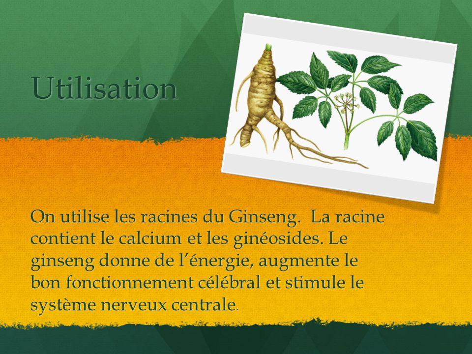 Utilisation On utilise les racines du Ginseng. La racine contient le calcium et les ginéosides. Le ginseng donne de lénergie, augmente le bon fonction