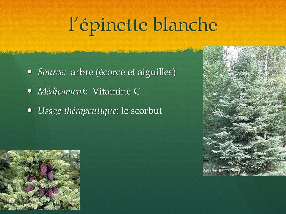 lépinette blanche Source: arbre (écorce et aiguilles) Source: arbre (écorce et aiguilles) Médicament: Vitamine C Médicament: Vitamine C Usage thérapeu