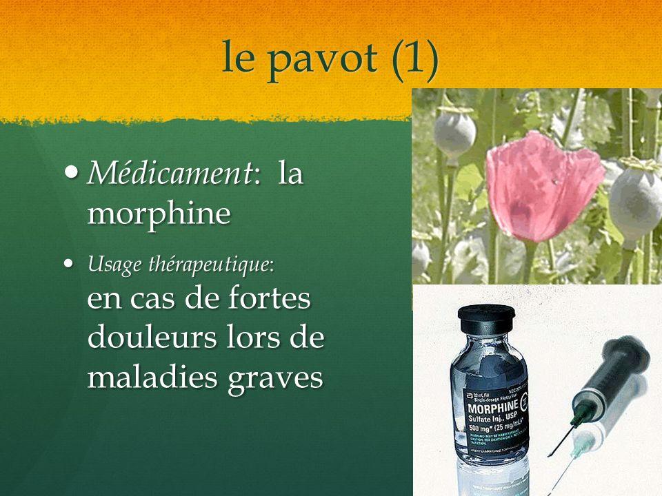 le pavot (1) Médicament : la morphine Médicament : la morphine Usage thérapeutique : en cas de fortes douleurs lors de maladies graves Usage thérapeut