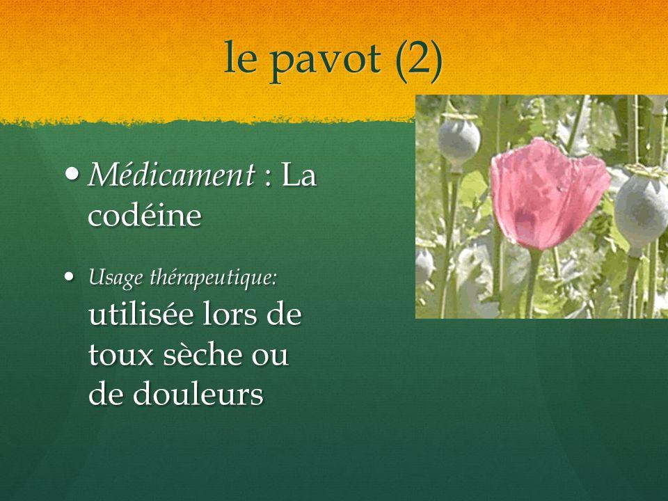 le pavot (2) Médicament : La codéine Médicament : La codéine Usage thérapeutique: utilisée lors de toux sèche ou de douleurs Usage thérapeutique: util
