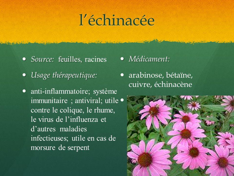 léchinacée Source: feuilles, Source: feuilles, racines Usage thérapeutique: Usage thérapeutique: anti-inflammatoire; système immunitaire ; antiviral;