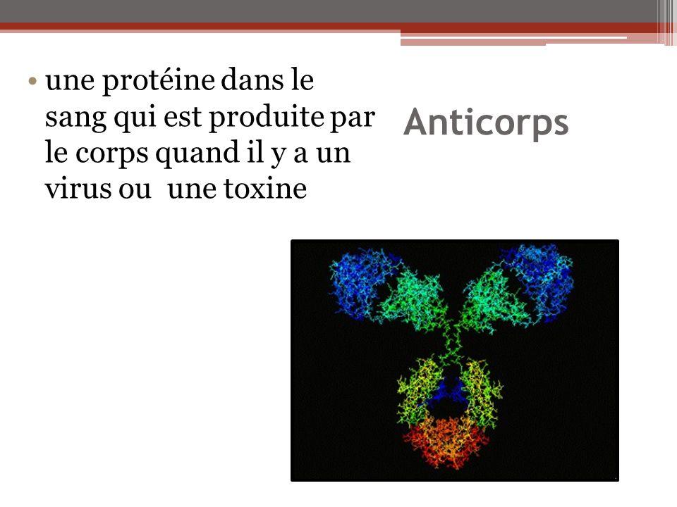 Anticorps une protéine dans le sang qui est produite par le corps quand il y a un virus ou une toxine