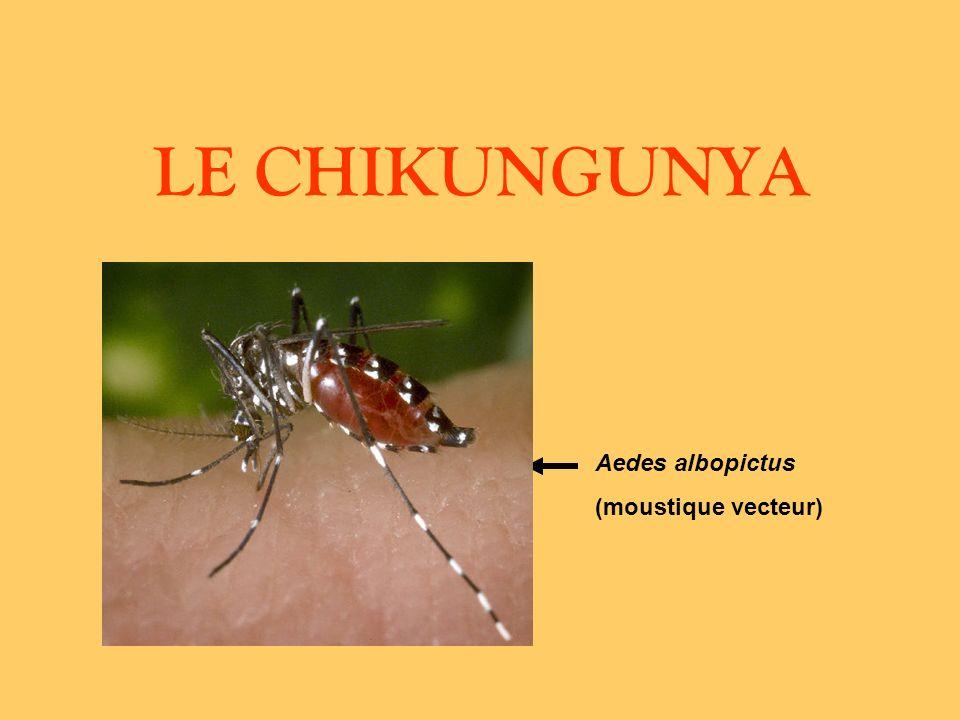 LE CHIKUNGUNYA Aedes albopictus (moustique vecteur)
