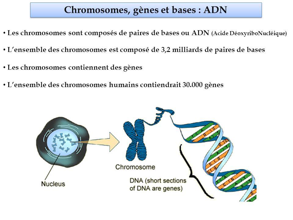 Chromosomes, gènes et bases : ADN Lensemble des chromosomes est composé de 3,2 milliards de paires de bases Les chromosomes contiennent des gènes Lensemble des chromosomes humains contiendrait 30.000 gènes Les chromosomes sont composés de paires de bases ou ADN (Acide DéoxyriboNucléique) BASE GENE CHROMOSOME lettre phraselivre