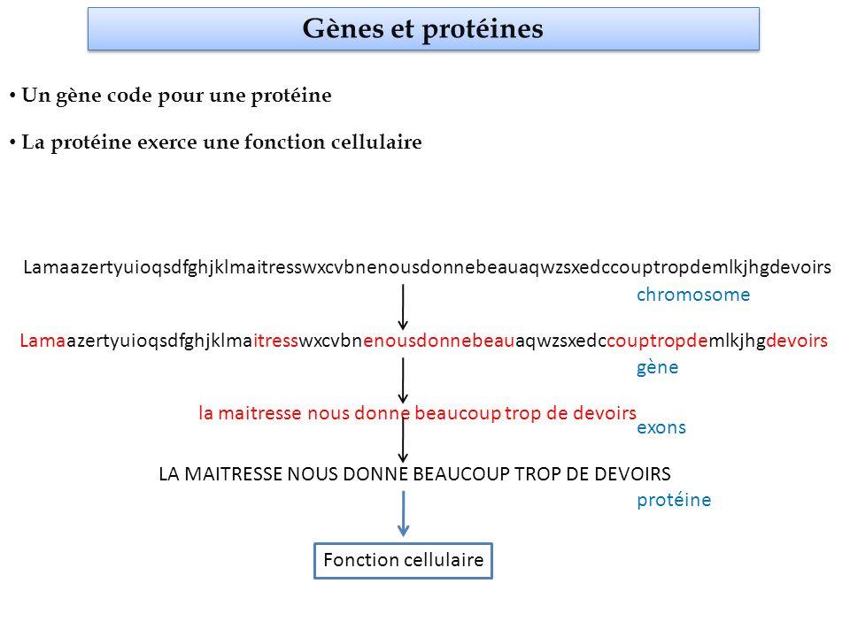 Etudes moléculaires de lADN II.