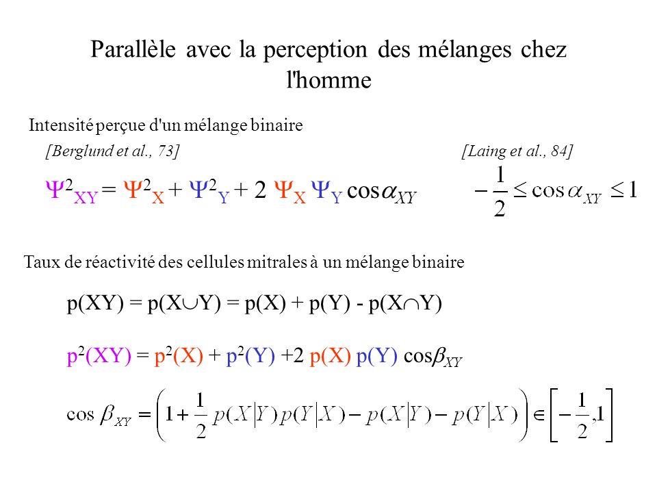 Parallèle avec la perception des mélanges chez l'homme [Berglund et al., 73][Laing et al., 84] Taux de réactivité des cellules mitrales à un mélange b