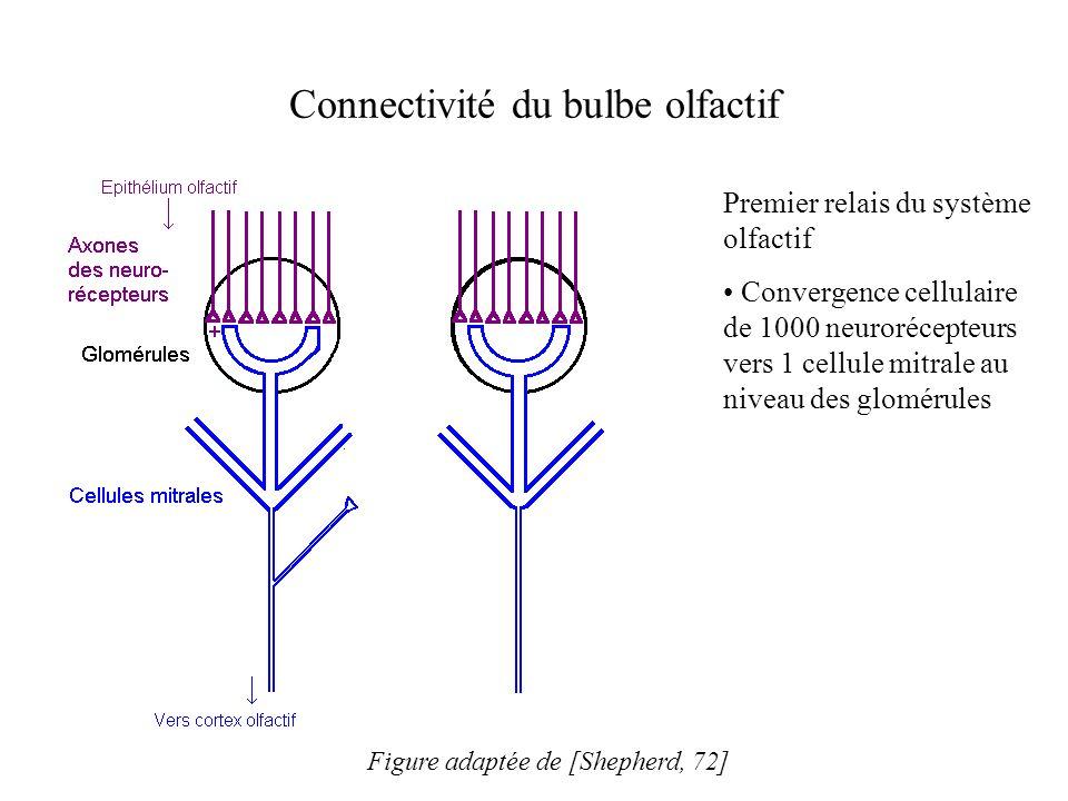 Connectivité du bulbe olfactif Premier relais du système olfactif Convergence cellulaire de 1000 neurorécepteurs vers 1 cellule mitrale au niveau des