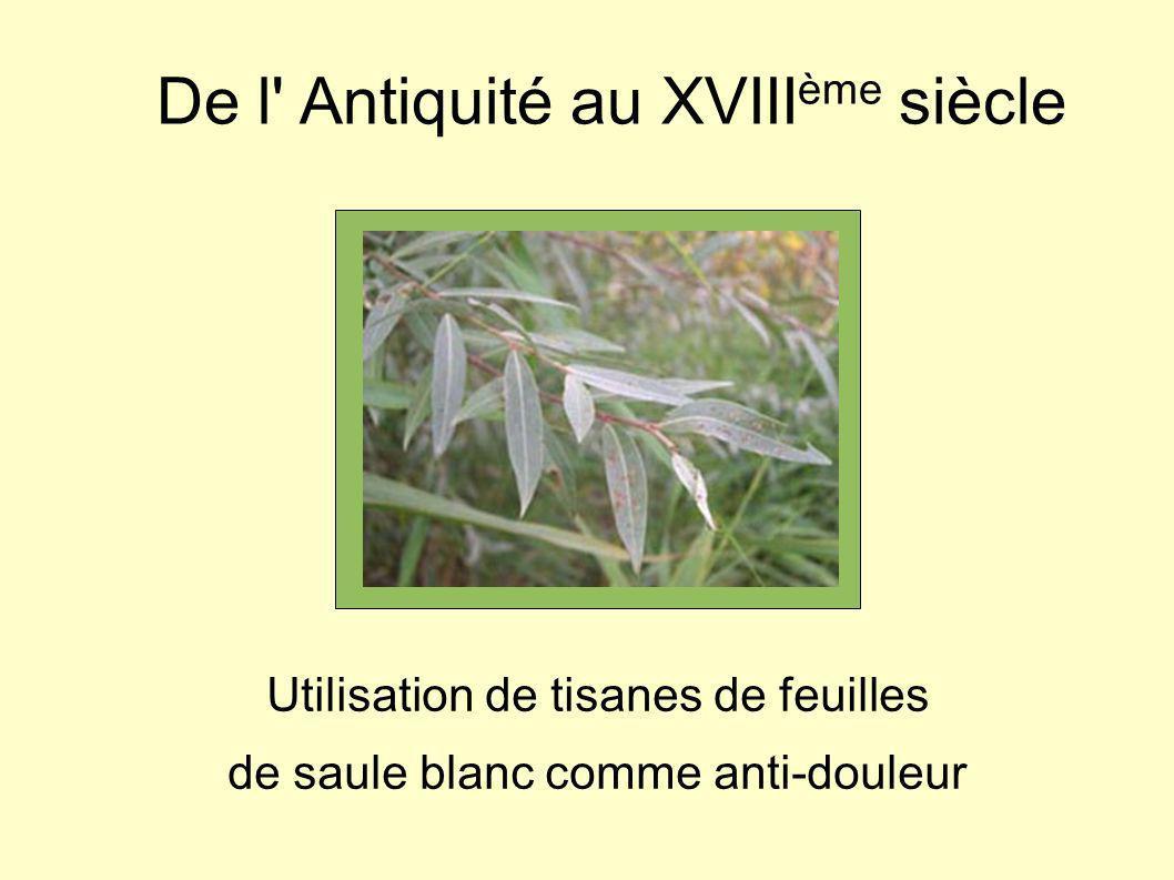 De l' Antiquité au XVIII ème siècle Utilisation de tisanes de feuilles de saule blanc comme anti-douleur