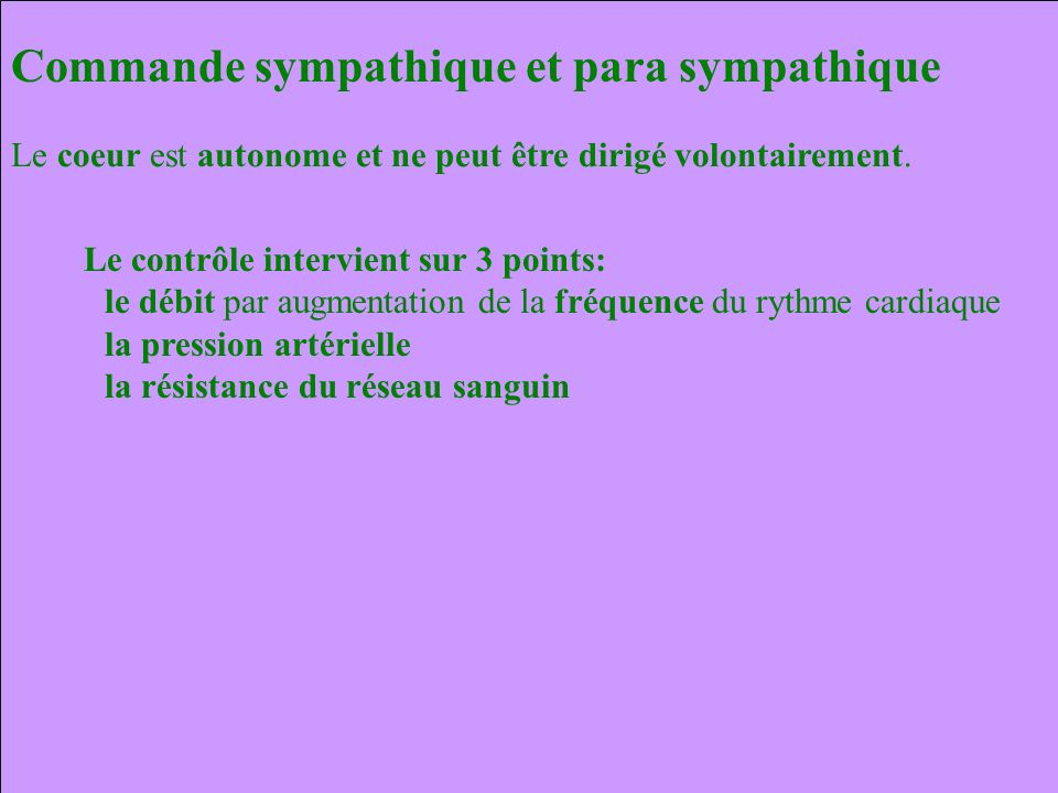 CORONAIRE DROITE CORONAIRE GAUCHE Artère Circonflexe Artère inter ventriculaire antérieure