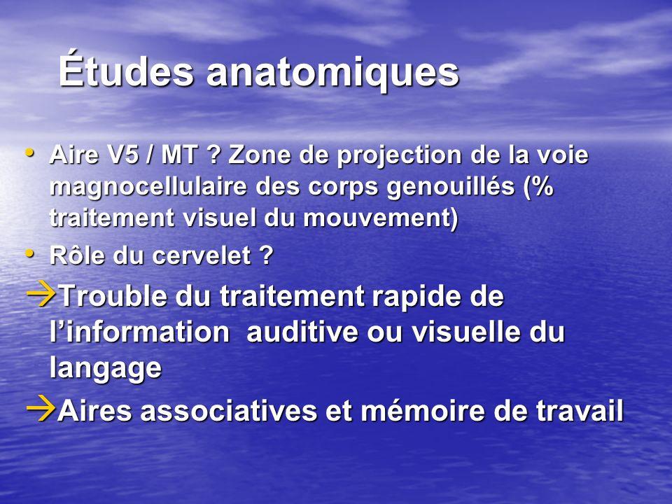 Études anatomiques Aire V5 / MT ? Zone de projection de la voie magnocellulaire des corps genouillés (% traitement visuel du mouvement) Aire V5 / MT ?