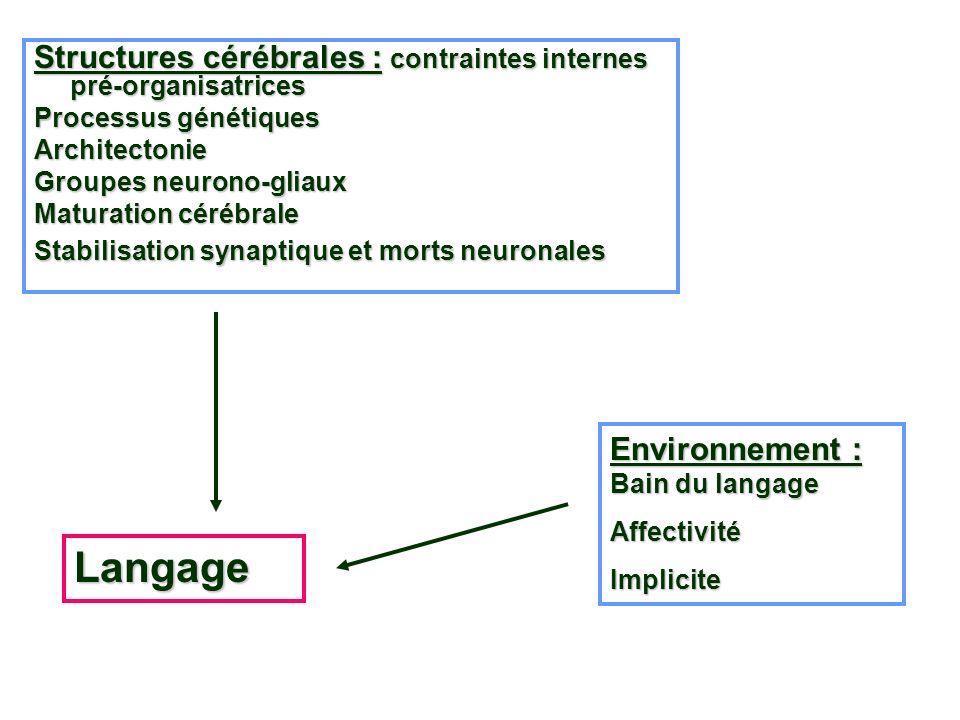 Structures cérébrales : contraintes internes pré-organisatrices Processus génétiques Architectonie Groupes neurono-gliaux Maturation cérébrale Stabili