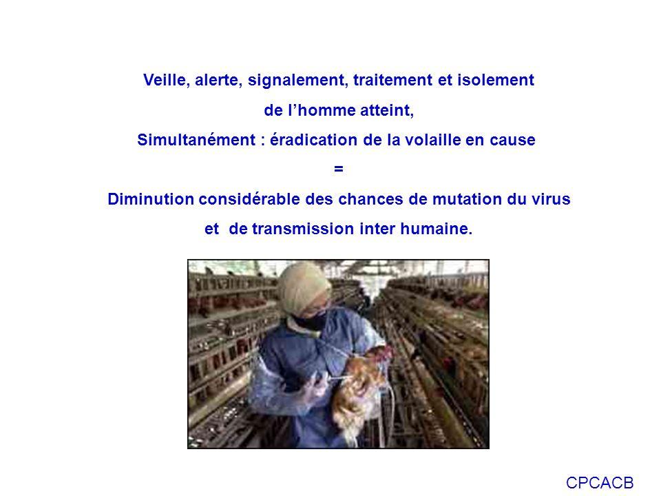 CPCACB Veille, alerte, signalement, traitement et isolement de lhomme atteint, Simultanément : éradication de la volaille en cause = Diminution consid