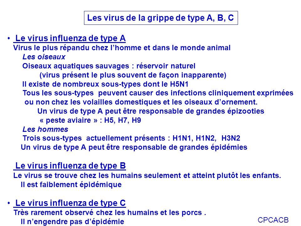 CPCACB Le virus influenza de type A Virus le plus répandu chez lhomme et dans le monde animal Les oiseaux Oiseaux aquatiques sauvages : réservoir natu