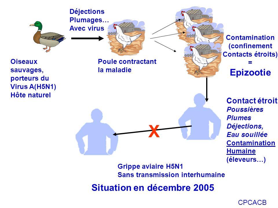 CPCACB Oiseaux sauvages, porteurs du Virus A(H5N1) Hôte naturel Déjections Plumages… Avec virus Poule contractant la maladie Contact étroit Poussières