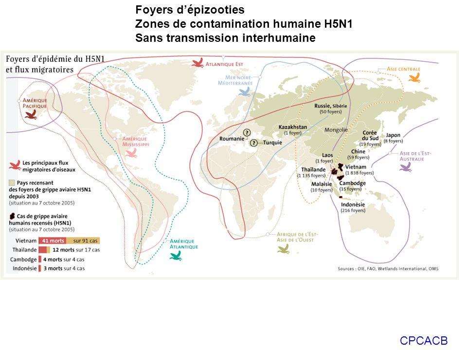 CPCACB Foyers dépizooties Zones de contamination humaine H5N1 Sans transmission interhumaine