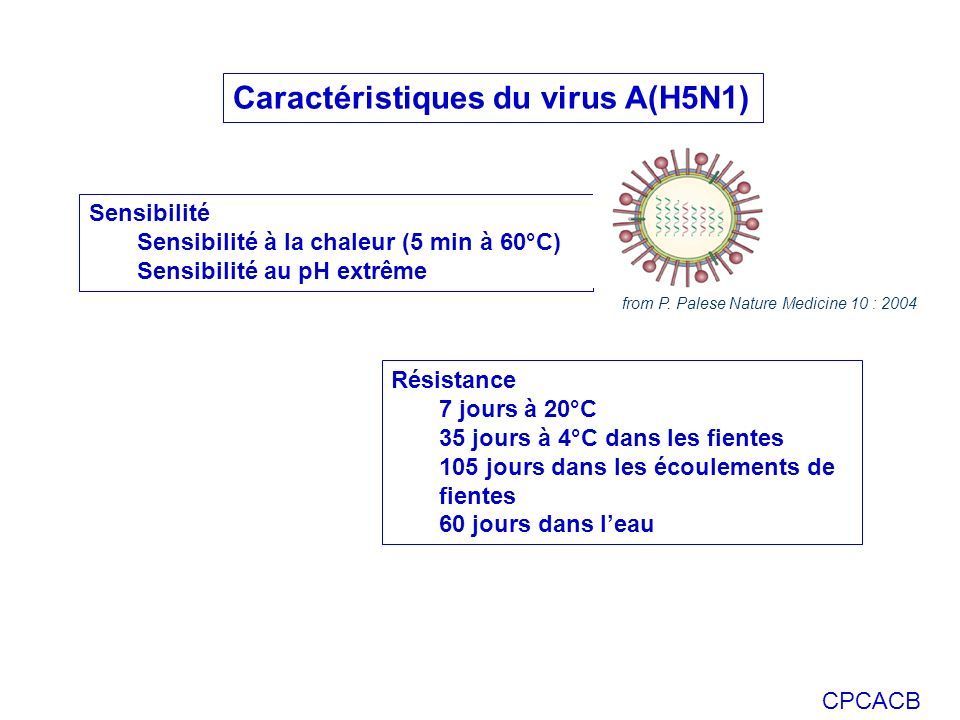 CPCACB Caractéristiques du virus A(H5N1) Résistance 7 jours à 20°C 35 jours à 4°C dans les fientes 105 jours dans les écoulements de fientes 60 jours dans leau Sensibilité Sensibilité à la chaleur (5 min à 60°C) Sensibilité au pH extrême from P.