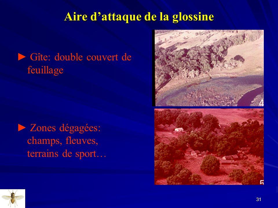 31 Aire dattaque de la glossine Gîte: double couvert de feuillage Zones dégagées: champs, fleuves, terrains de sport…