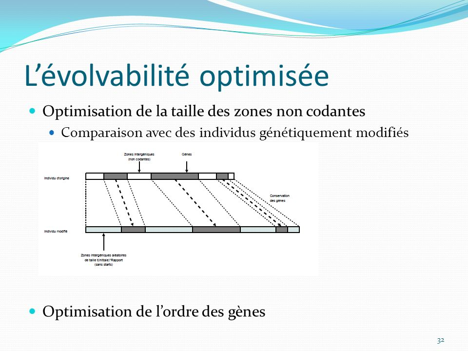 Lévolvabilité optimisée Optimisation de la taille des zones non codantes Comparaison avec des individus génétiquement modifiés Optimisation de lordre