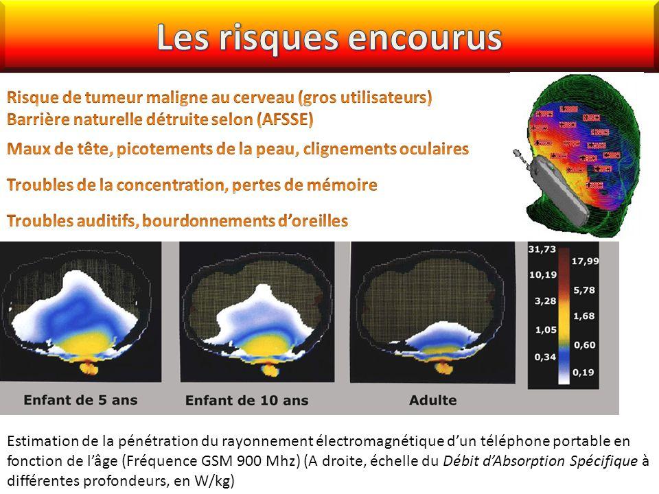 Estimation de la pénétration du rayonnement électromagnétique dun téléphone portable en fonction de lâge (Fréquence GSM 900 Mhz) (A droite, échelle du Débit dAbsorption Spécifique à différentes profondeurs, en W/kg)