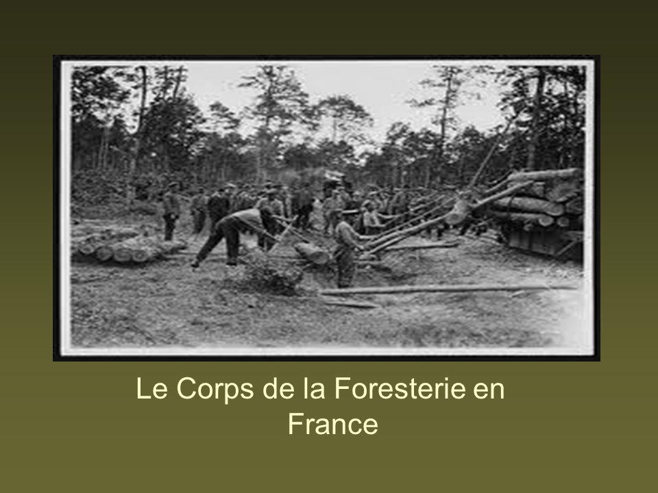 Le Corps de la Foresterie en France