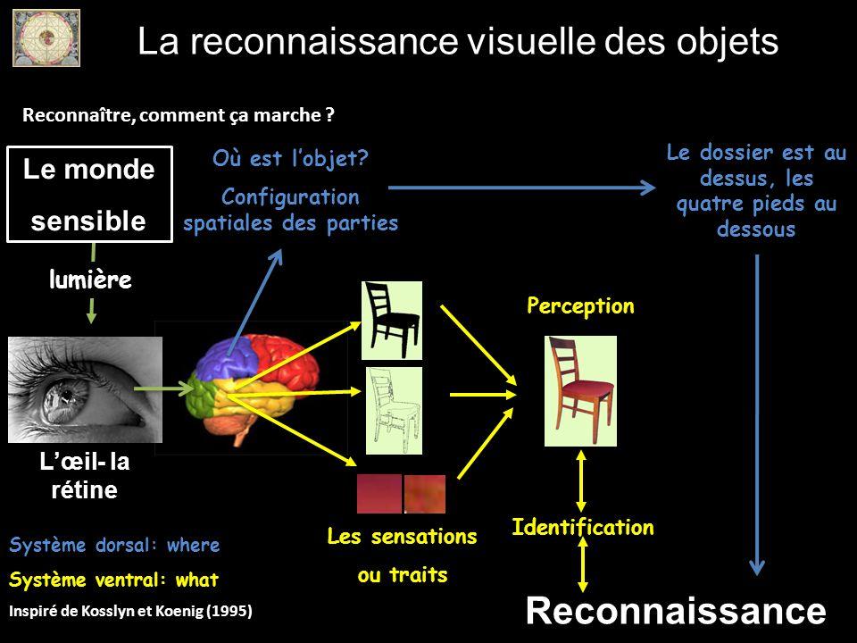 La reconnaissance visuelle des objets Reconnaître, comment ça marche ? lumière Lœil- la rétine Le monde sensible Perception Identification Les sensati