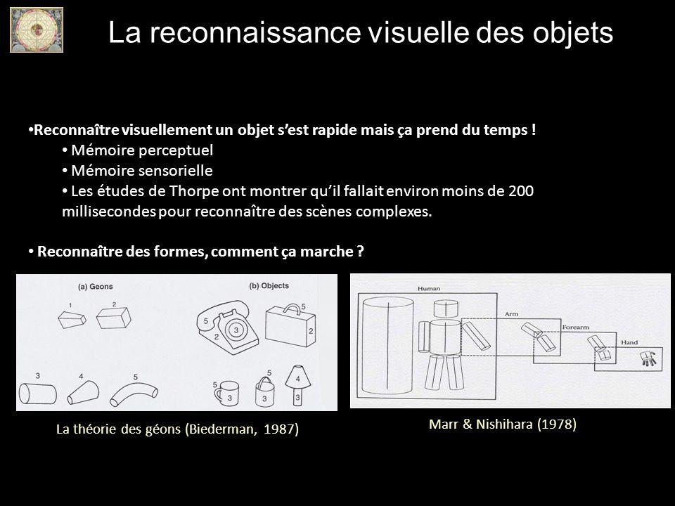 La reconnaissance visuelle des objets Reconnaître visuellement un objet sest rapide mais ça prend du temps ! Mémoire perceptuel Mémoire sensorielle Le