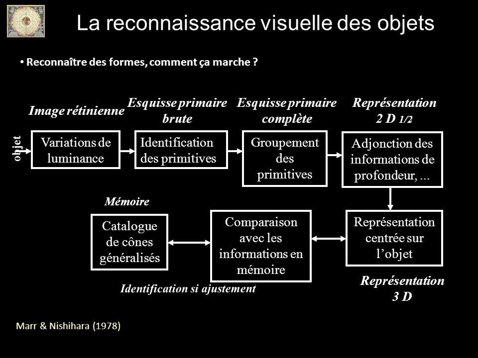 La reconnaissance visuelle des objets Reconnaître des formes, comment ça marche ? Marr & Nishihara (1978) Variations de luminance Identification des p