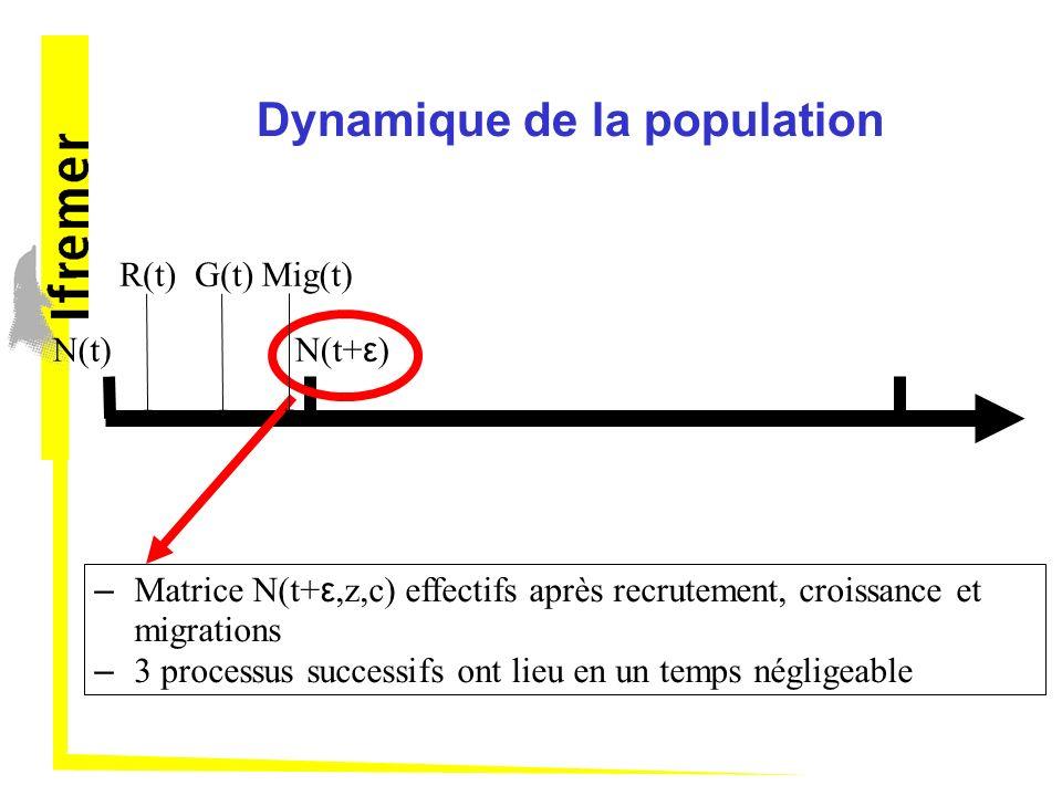 Dynamique de la population N(t) – Matrice N(t+ ε,z,c) effectifs après recrutement, croissance et migrations – 3 processus successifs ont lieu en un temps négligeable R(t)G(t)Mig(t) N(t+ ε )