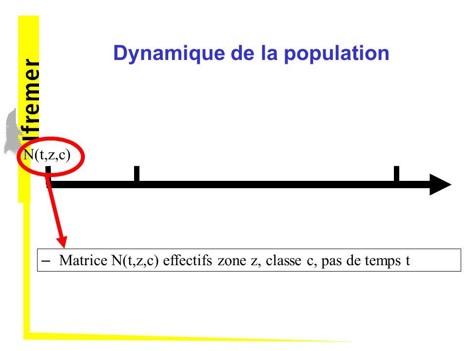 Dynamique de la population N(t,z,c) – Matrice N(t,z,c) effectifs zone z, classe c, pas de temps t