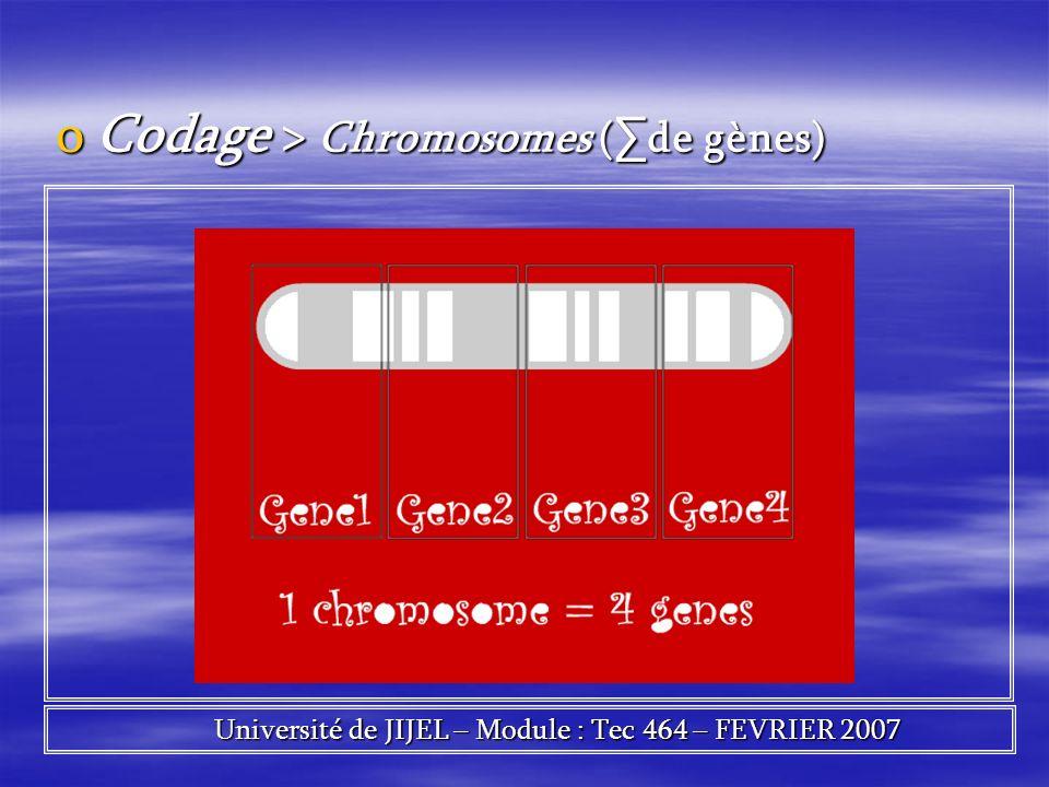 oCodage > Chromosomes ( de gènes) Université de JIJEL – Module : Tec 464 – FEVRIER 2007 Université de JIJEL – Module : Tec 464 – FEVRIER 2007