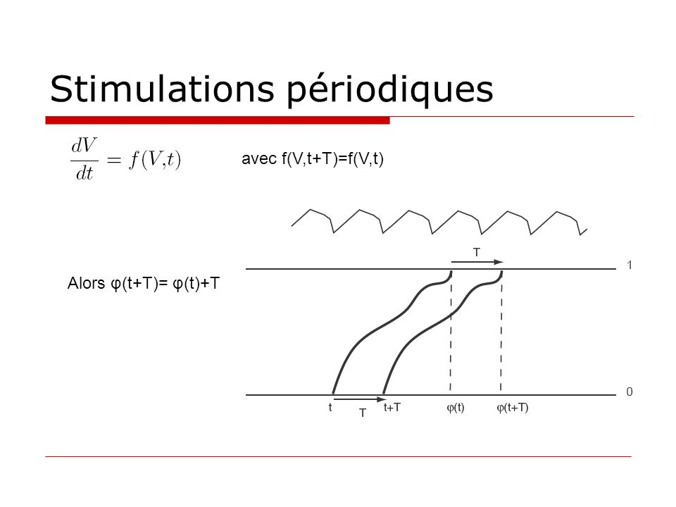Stimulations périodiques avec f(V,t+T)=f(V,t) Alors φ(t+T)= φ(t)+T