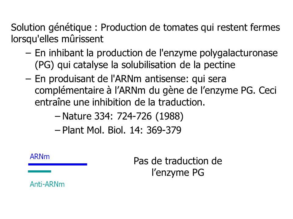 Solution génétique : Production de tomates qui restent fermes lorsqu'elles mûrissent –En inhibant la production de l'enzyme polygalacturonase (PG) qui