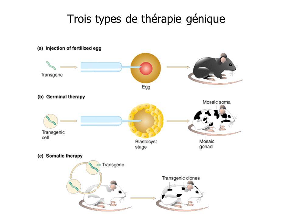 Trois types de thérapie génique