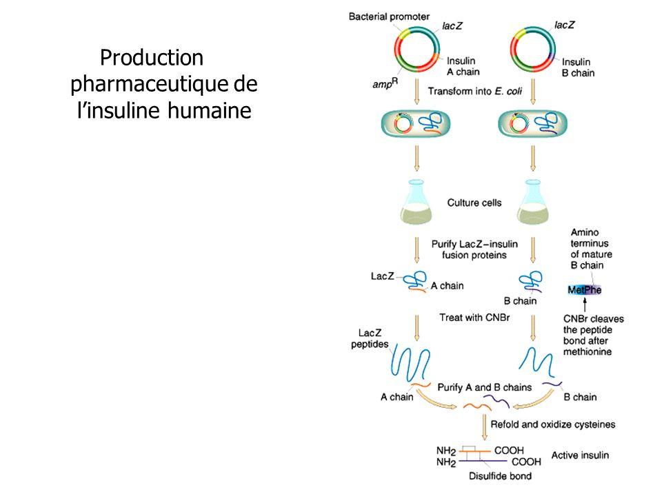 Production pharmaceutique de linsuline humaine