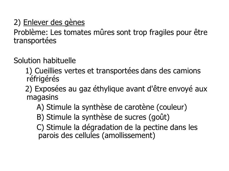 2) Enlever des gènes Problème: Les tomates mûres sont trop fragiles pour être transportées Solution habituelle 1) Cueillies vertes et transportées dan