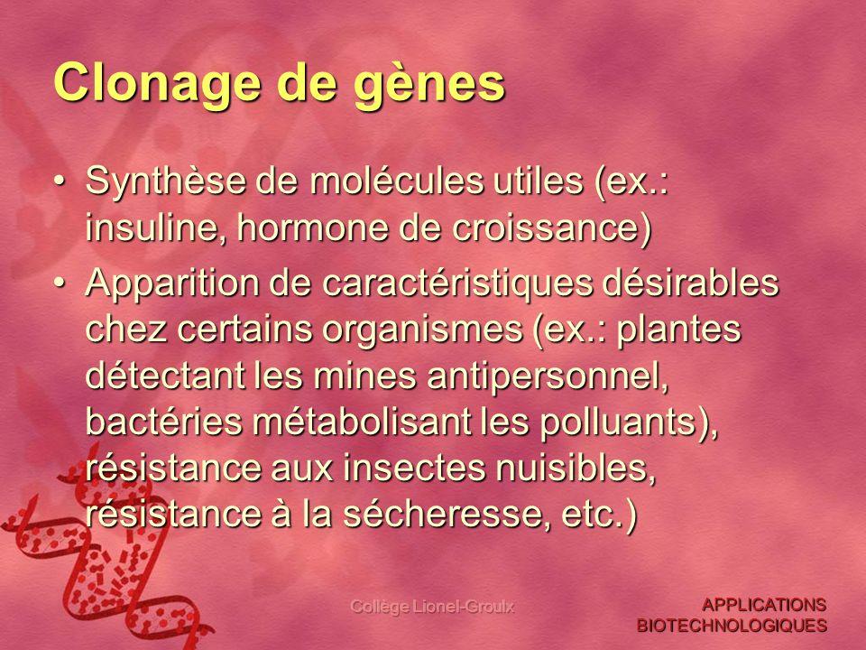Collège Lionel-Groulx Clonage de gènes Synthèse de molécules utiles (ex.: insuline, hormone de croissance)Synthèse de molécules utiles (ex.: insuline,