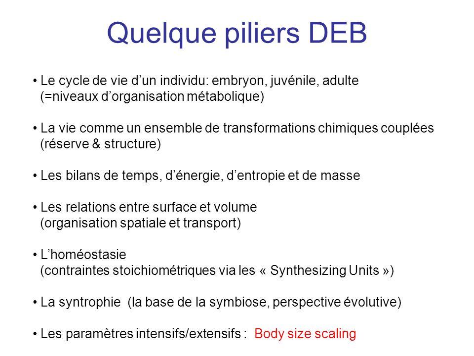 Quelque piliers DEB Le cycle de vie dun individu: embryon, juvénile, adulte (=niveaux dorganisation métabolique) La vie comme un ensemble de transform