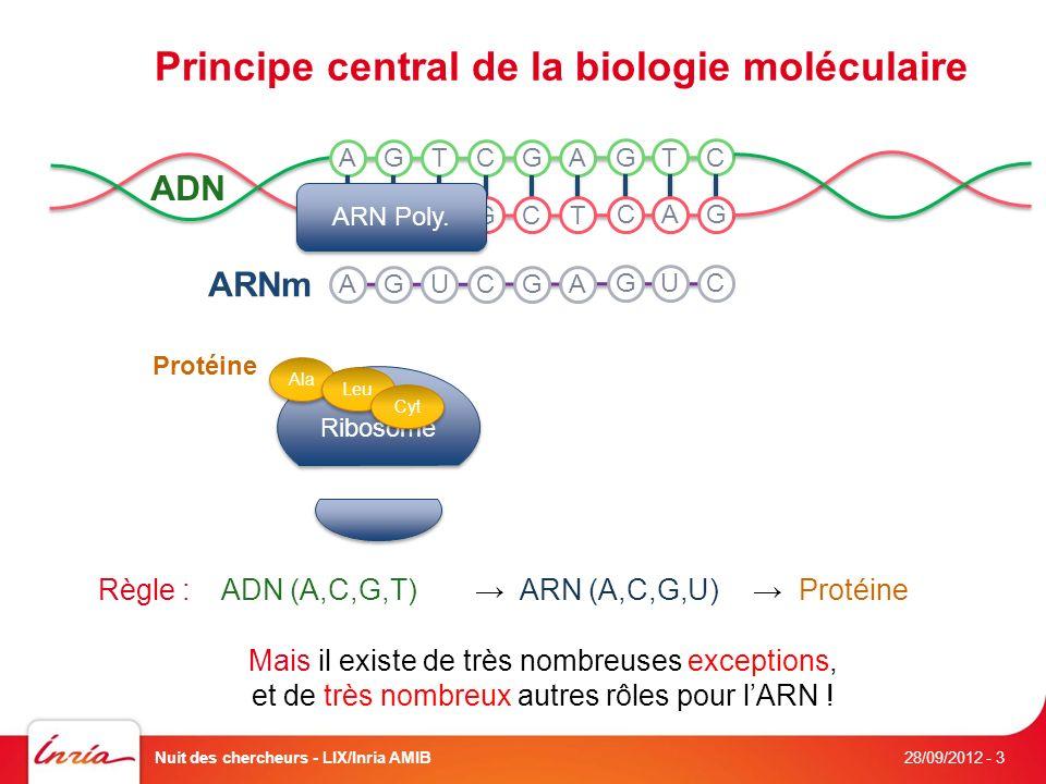 Principe central de la biologie moléculaire 28/09/2012 Nuit des chercheurs - LIX/Inria AMIB- 3 ADN A T G C T A C G A T G C G C T A C G ARN Poly.