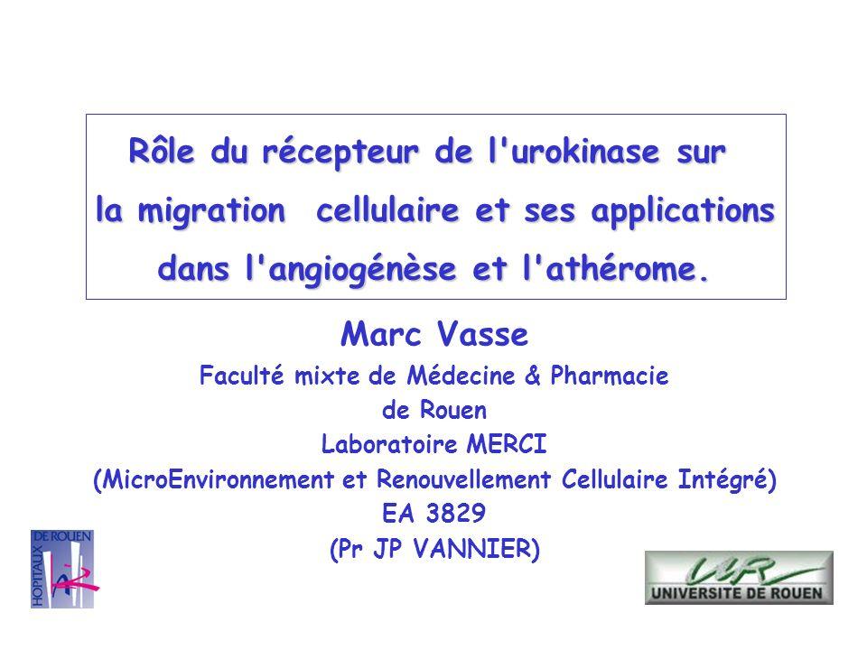 Marc Vasse Faculté mixte de Médecine & Pharmacie de Rouen Laboratoire MERCI (MicroEnvironnement et Renouvellement Cellulaire Intégré) EA 3829 (Pr JP V