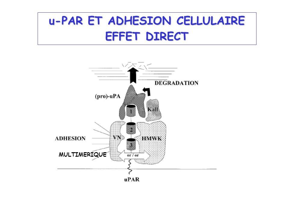 u-PAR ET ADHESION CELLULAIRE EFFET DIRECT MULTIMERIQUE