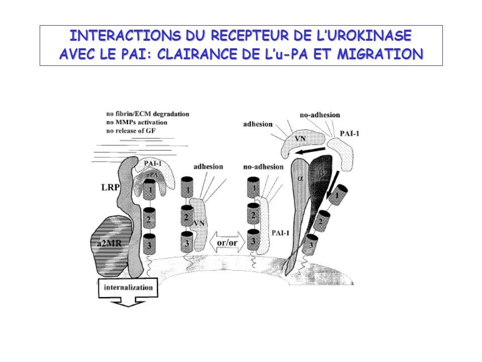INTERACTIONS DU RECEPTEUR DE LUROKINASE AVEC LE PAI: CLAIRANCE DE Lu-PA ET MIGRATION